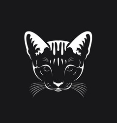 cat face on black background pet animals vector image vector image