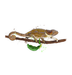 chameleon from a splash watercolor colored vector image
