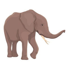 Elephant isolated vector