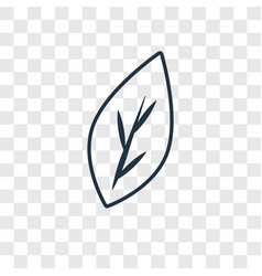 Leaf concept linear icon isolated on transparent vector