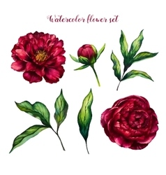 Watercolor flower set of peonies and leaves vector