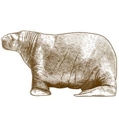 engraving antique walrus vector image