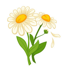 Flower daisy blossom bud or bloom flat vector