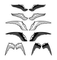 graphic collection of wings vector image