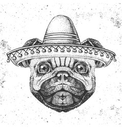 Hipster animal pug-dog wearing a sombrero hat vector