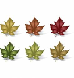 six leaves vector image