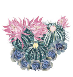 t-shirt print with pink blooming cactus succulent vector image