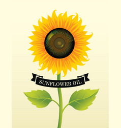 Banner for sunflower oil with a big flower vector