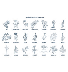 Collection of natural herbs for congestion vector