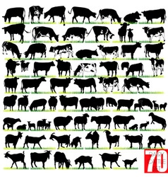 Dairy cattle silhouettes set vector