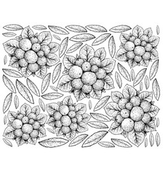 Hand drawn of ripe coralberries on white backgroun vector