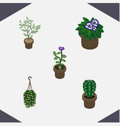 Isometric flower set of fern blossom flowerpot vector
