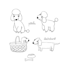 Set of cute dachshund and poodle in vector image