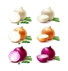 Set of White Yellow Red Onion Bulbs Isolated vector