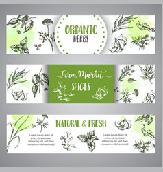 spices and herbs banners set sketch with hand vector image
