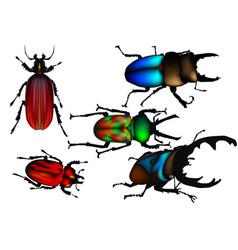 Beetles set on white vector