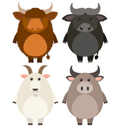 Farm animals on white background vector