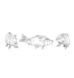 Fish carp hand drawn set vector