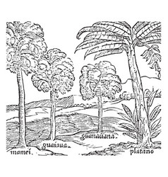 Hispaniola trees vintage vector