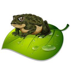 One toad on green leaf on white background vector