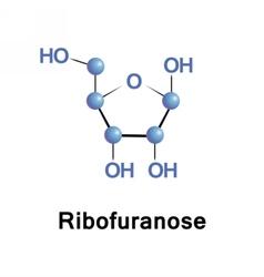 Ribose part of RNA vector image