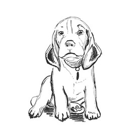 sketching dog portrait pet hand drawn vector image vector image