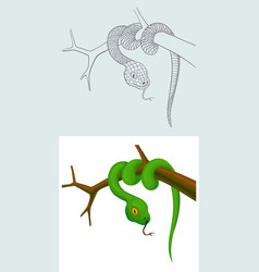 snake on a branch outline and cartoon vector image