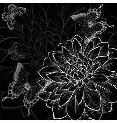 Black and white background dahlia and butterflies vector
