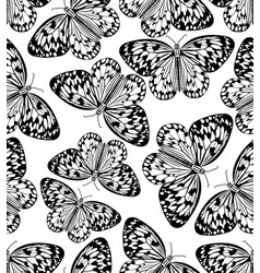 butterfly monochrome drawing black line drawing vector image