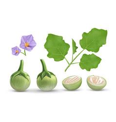 Eggplant leave and purple flower vector