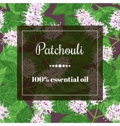 patchouli essential oil vector image