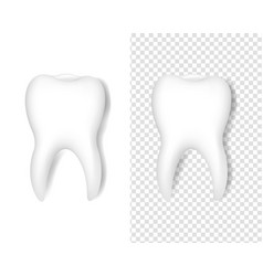 white tooth symbol isolated white and transparent vector image