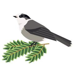 Wild birds canada gray jay a vector