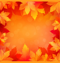 autumn fall background with bright golden maple vector image