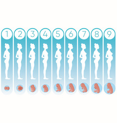 pregnancy woman stages with vector image
