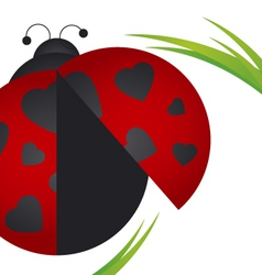 Ladybug on white background vector image