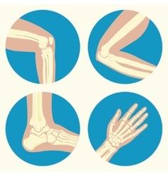 set human joints vector image
