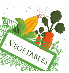 vegetables fresh healthy nutrition poster vector image