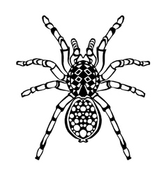 Zentangle stylized spider Sketch for tattoo or t vector image