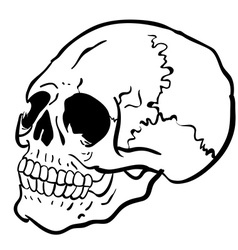 black and white another skull vector image