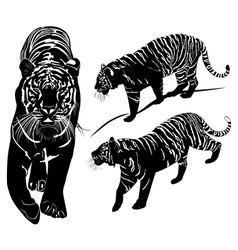 tiger black and white vector image