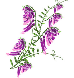 Green twig with blooming purple flowers mouse peas vector
