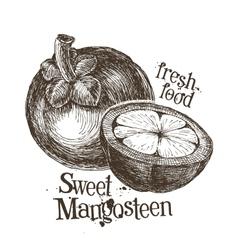 Mangosteen logo design template fresh fruit food vector