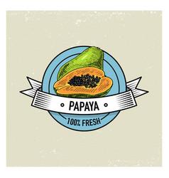 papaya vintage hand drawn fresh fruits background vector image