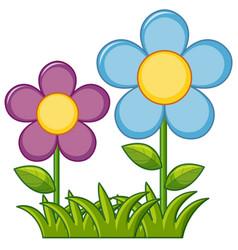Purple and blue flowers in garden vector