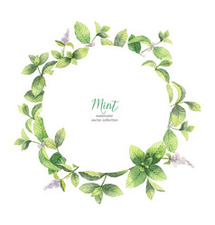 watercolor frame of mint branches isolated vector image