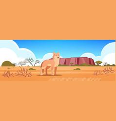 Dingo enjoying sun in australia desert vector