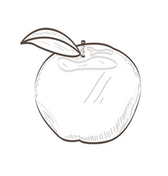 isolated apple outline vector image