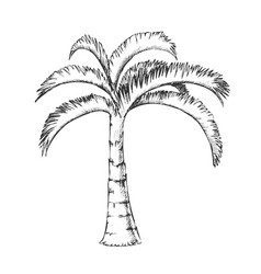 palm jamaican coconut tropical tree ink vector image