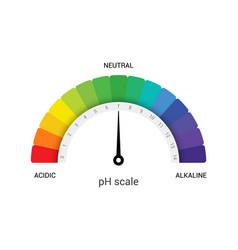 ph scale indicator chart diagram acidic alkaline vector image